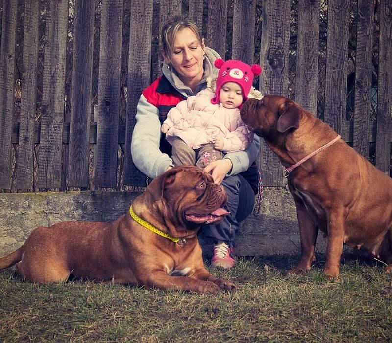 Programas para perros entrenamientos colombia running paws 10 Adiestramiento y correción de conductas