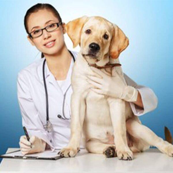 Consulta-veterinaria-a-domicilio---Healthy-Paw-1
