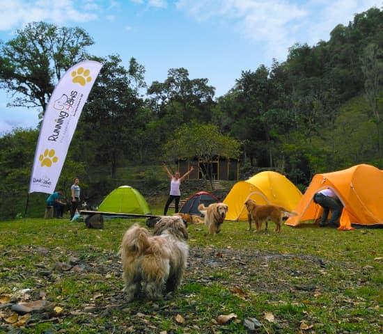Imagen Camping Paw seccion actividades